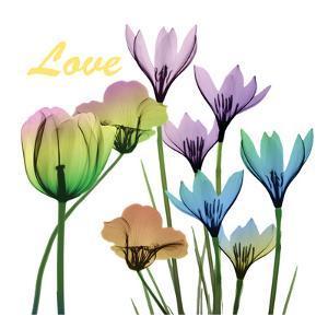 Floral Rainbow Love by Albert Koetsier