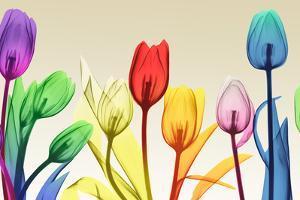 Floral Rainbow Splurge by Albert Koetsier