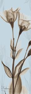 Flower 1 by Albert Koetsier