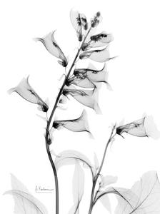 Foxglove Gray by Albert Koetsier