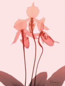 Furiosa Orchid by Albert Koetsier