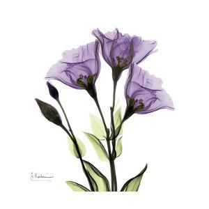 Gentian in Purple by Albert Koetsier