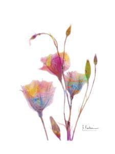 GentianB9 Watercolor by Albert Koetsier