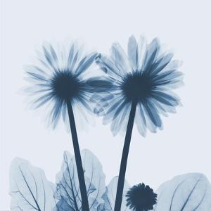 Gerbera in Blue by Albert Koetsier