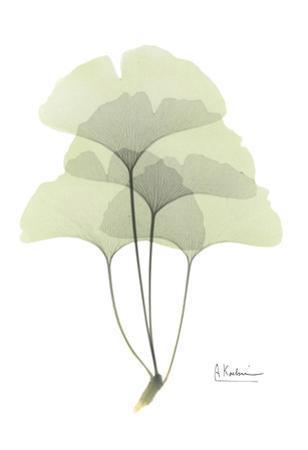 Ginkgo in Pale Green