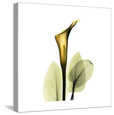 Amy Brown OUT OF PRINT Golden Calla Lilly
