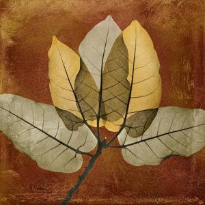 Golden Ficus Burkey by Albert Koetsier