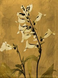 Golden Foxglove by Albert Koetsier