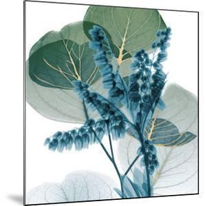 Golden Lilly Of Eucalyptus 2 by Albert Koetsier