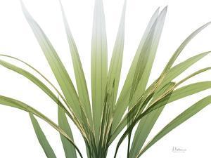 Golden Palm by Albert Koetsier