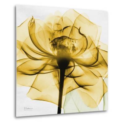 Golden Rose Close-Up