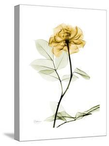 Golden Rose by Albert Koetsier