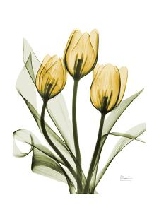 Golden Tulips by Albert Koetsier