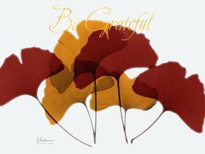 Grateful Gingko Fall by Albert Koetsier