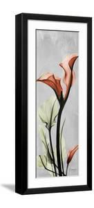 Gray Calla Lily 1 by Albert Koetsier