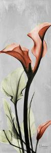 Gray Calla Lily 1 by Albert Koetsier