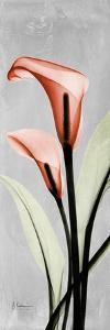 Gray Calla Lily 2 by Albert Koetsier