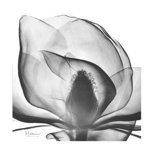Gray Magnolia by Albert Koetsier