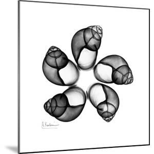Gray Snail Shells 2 by Albert Koetsier