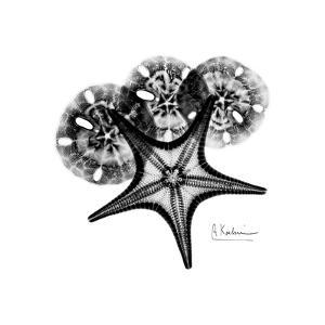 Gray Starfish 1 by Albert Koetsier