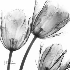 Gray Tulips by Albert Koetsier