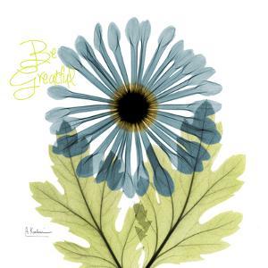 Greatful Chrysanthemum H68 by Albert Koetsier