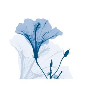 Hibiscus Chiller by Albert Koetsier