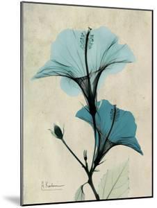 Hibiscus Moments by Albert Koetsier