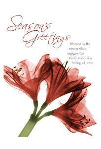 Holiday Amaryllis 1 by Albert Koetsier