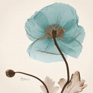 Iceland Poppy Believe by Albert Koetsier