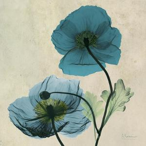 Iceland Poppy Duo by Albert Koetsier