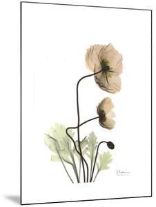 Iceland Poppy Portrait 2 by Albert Koetsier