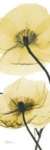 Iceland Poppy Yellow by Albert Koetsier