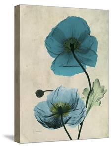 Iceland Poppy by Albert Koetsier