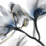 Shimmering Blush Snail 2-Albert Koetsier-Photo