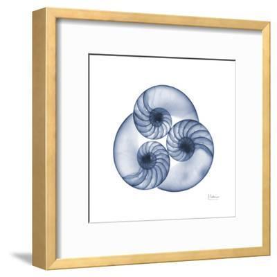 Indigo Sea Nautilus