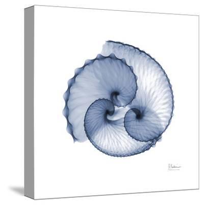 Indigo Sea Shells