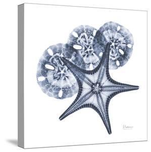 Indigo Starfish and Sand Dollar by Albert Koetsier