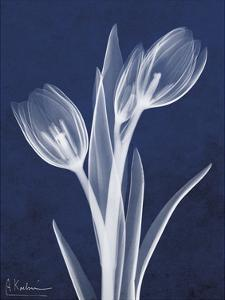 Indigo Tulips by Albert Koetsier