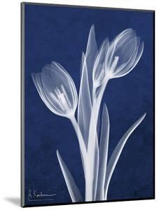 Indigo Tulips by Albert Koetsier