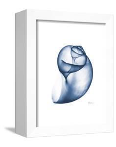 Indigo Water Snail by Albert Koetsier