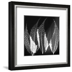 Japanese Fern Black and White by Albert Koetsier
