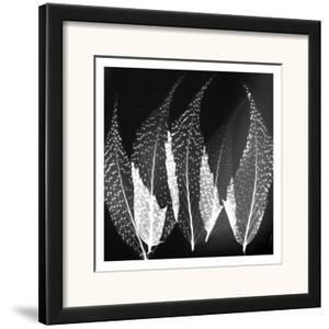 Japanese Fern Black and White by Albert Koetsier