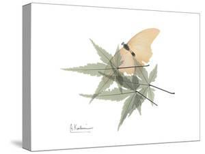 Japanese Maple Nature by Albert Koetsier