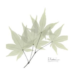 Japanese Maple Portrait 2 by Albert Koetsier