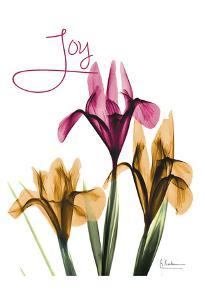 Joyful Iris by Albert Koetsier
