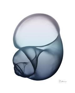 Lavender Snail 1 by Albert Koetsier