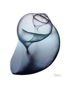 Lavender Snail 3 by Albert Koetsier