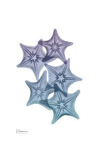 Lavender Splashed Starfish 1 by Albert Koetsier