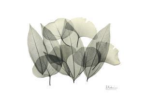 Leaf Compostion by Albert Koetsier